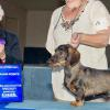 CH. Boreas Setting Fire To The Rain SW shown here winning a 5pt Specialty major under Wirehaired Breeder Judge Dr. Edna Martin