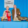 Magic, Boreas Love Is Magic winning 2nd place in the 9-12 month puppy classes at DCA under Wirehaired Breeder Judge Jane Fowler
