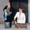 Tadee's first major and first specialty win and first BBE in Specialty shown here winning under Basset Breeder Judge Sandi Chrysanthiss